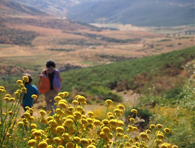 Flores y gente caminando por el campo