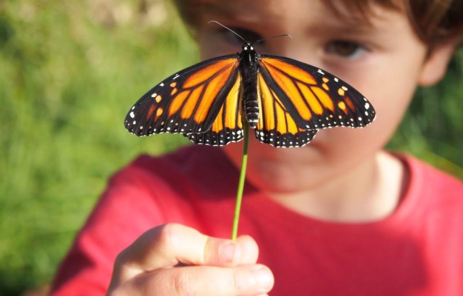 Nico mirando una mariposa monarca de cerca