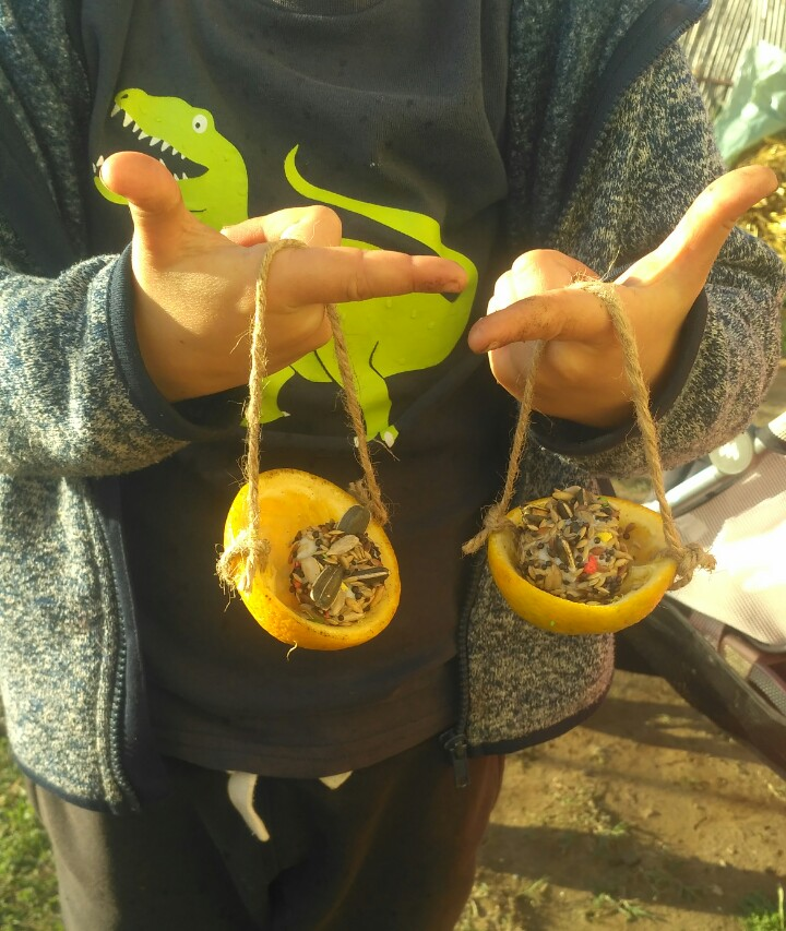 Comederos para pájaros hechos con cáscaras de naranja y cordón