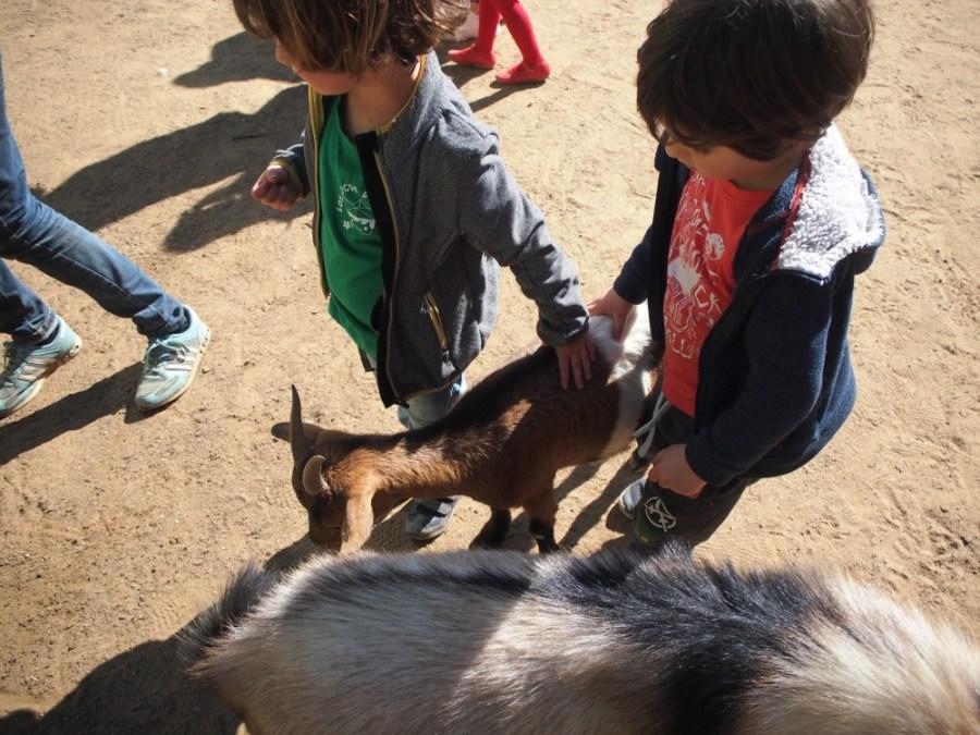 Acariciando la cabras en el zoo de Castellar