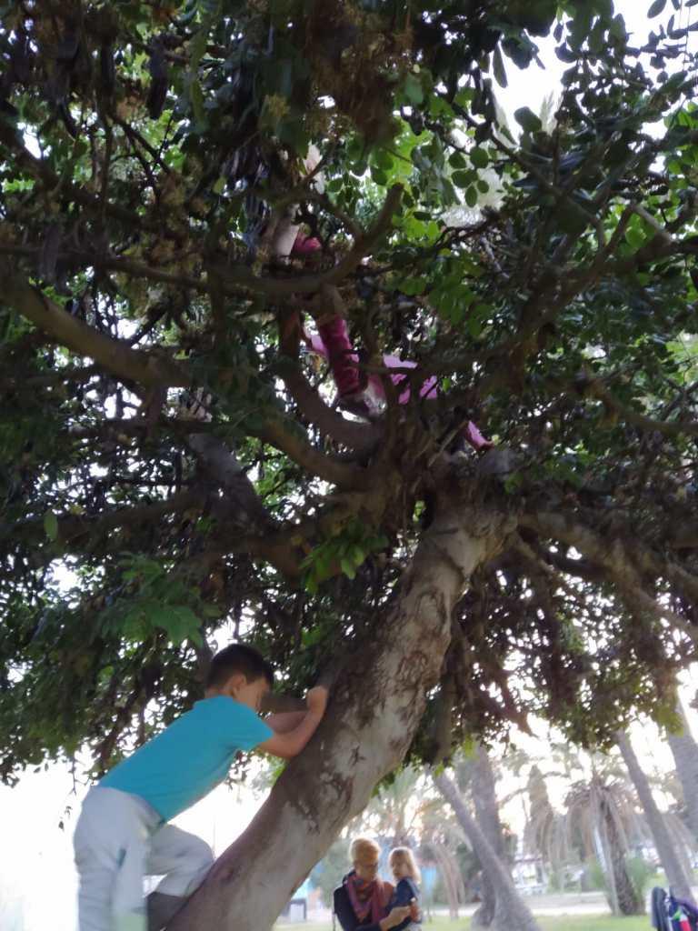 Niño escalando un árbol de algarrobo, niñas ya en lo alto del arbol