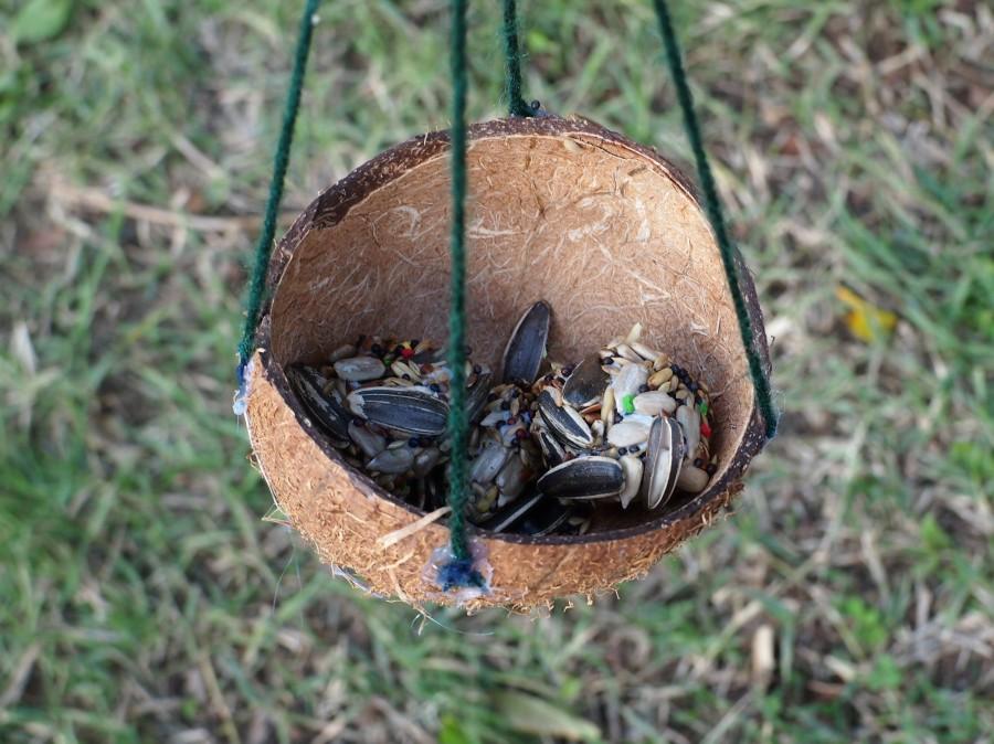 Comedro de aves hecho en cáscara de coco