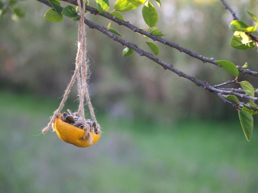 Comedero de cáscara de naranja colgado de ram con semillas para pájaros