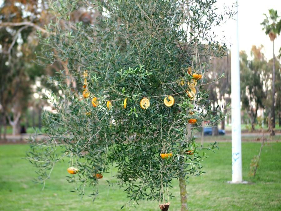 Arbol de navidad decorado con rodajas de naranja y cestitas de comederos de aves