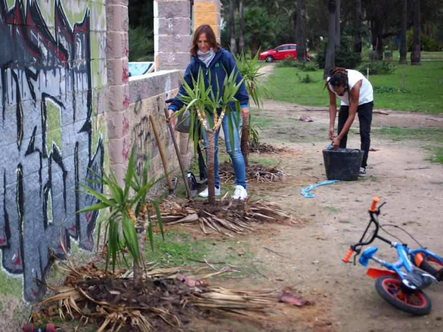 Gente haciendo jardinería de guerrilla y plantando yuccas en un parque