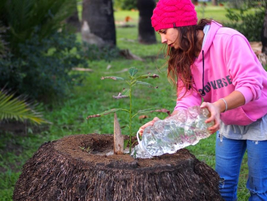 Chica regando con una garrafa de plástico  un aguacatero recien plantado