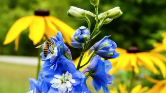 Bees201620160716-P1600303 340x192px