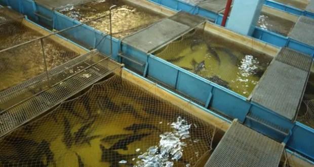 В Севастополе может появиться Рыбзавод, если будут деньги