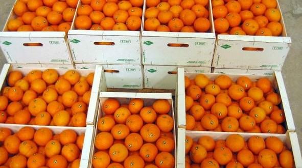 Гнилые турецкие мандарины отправили из Севастополя на родину