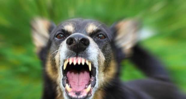 В Керчи 5-летнюю девочку покусала бездомная собака