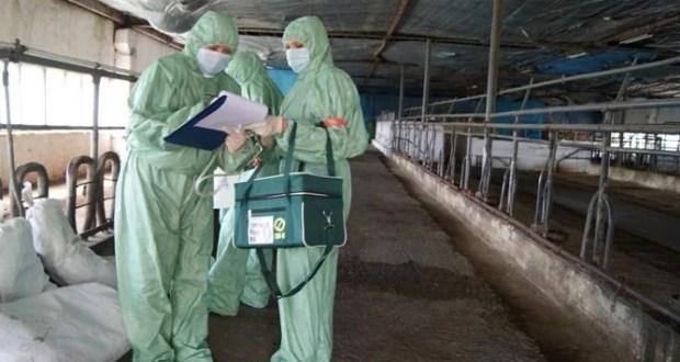 Владельцы свиней в Крыму получат компенсации за убытки
