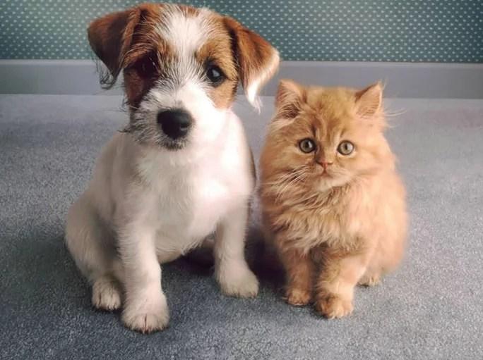 Домашние животные Крыма должны будут пройти регистрацию
