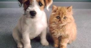 Домашние животные Крыма