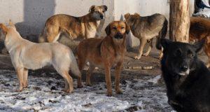 Шок! В Севастополе свора бездомных собак загрызла жеребенка