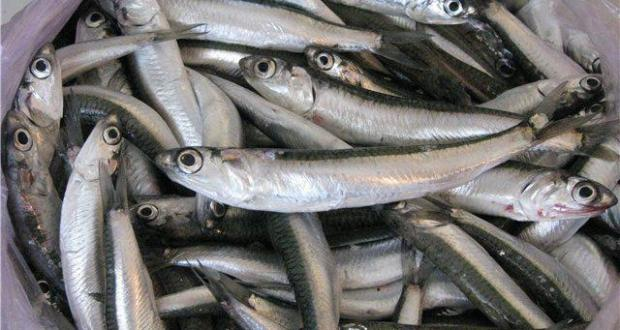 Рыбаки Крыма называют 2016 год успешным