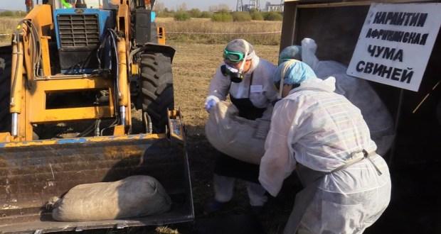 Россельхознадзор поссорился с ветеринарной службой Крыма