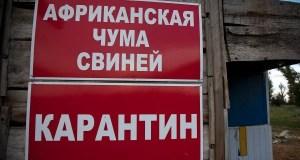 В Советском районе Крыма официально объявлен карантин по АЧС