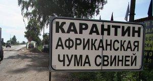 В Крыму снова вспышка африканской чумы свиней. Сразу в трех районах