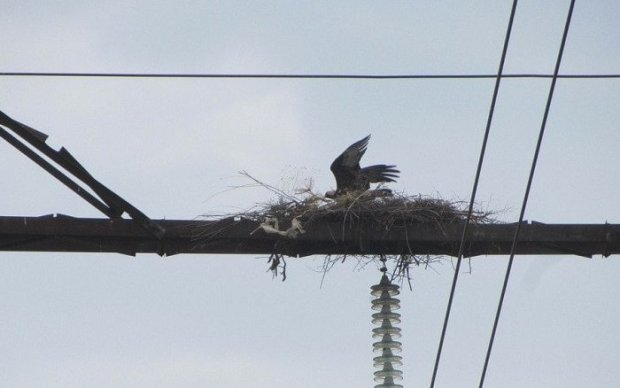 Птицы портят воздушные линии электропередач в Крыму, но энергетики пернатых берегут
