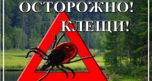 В Крыму клещи укусили уже более полутора тысяч человек
