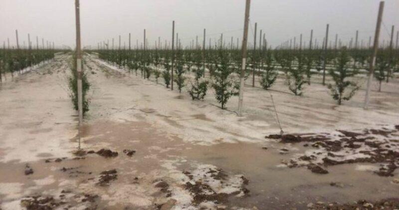 Непогода снова огорчила крымских аграриев