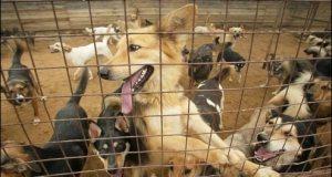 Приют для бездомных животных в Симферополе будет. Точные сроки реализации проекта?