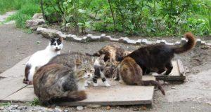 В Крыму обитают, минимум, 15 тысяч бездомных животных