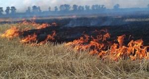 С начала лета в Крыму произошло 510 пожаров