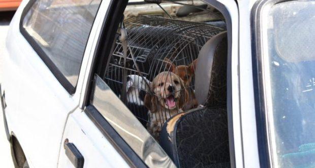 В Симферополе разбирались с торговцами животными