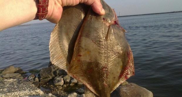 В Черном море запретили ловить камбалу-калкан