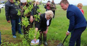 В Керчи у памятника «Парус» сегодня посадят деревья