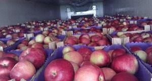 В Крым из Украины везут фрукты, овощи и посадочный материал