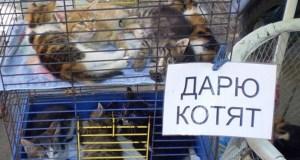 Где именно будут книжный и птичий рынки в Симферополе
