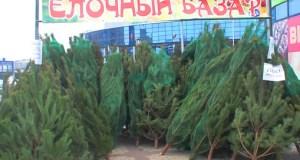 Пришло время ёлок! Узнай, где в Симферополе заработают ёлочные базары