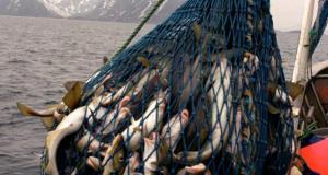 Росрыболовство: Севастополь добывает почти половину общекрымского объема вылова рыбы