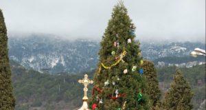 Администрация Никитского ботанического сада решила нарядить к Новому году... секвойядендрон