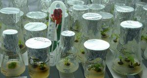 Работа учёных Никитского ботанического сада вошла в ТОП-10 исследований российских учёных 2017 года