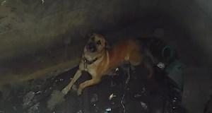 Неравнодушные керчане спасли собаку, застрявшую в подвале заброшенного тира