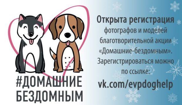 28 января в Евпатории: акция «Домашние — Бездомным». В помощь животным