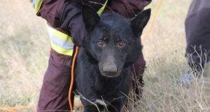 Добрые люди есть или... как в Керчи спасали собаку, упавшую в шестиметровую яму