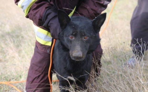 Добрые люди есть или… как в Керчи спасали собаку, упавшую в шестиметровую яму