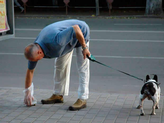 Депутаты Госсовета РК хотят наказывать «рублём» владельцев собак, не убирающих за своими питомцами на улицах