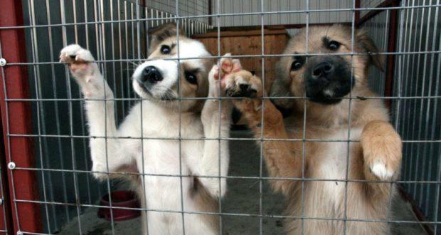 Приют для животных в Симферополе начнут строить в апреле