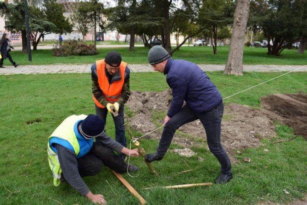 В Симферополе высаживали и обрезали деревья