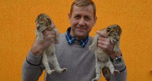 В парке львов «Тайган» - львиный беби-бум