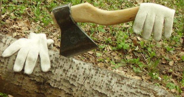 Прокуратура выявила факт незаконной рубки деревьев в Джанкойском районе Крыма