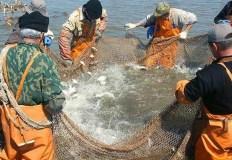 Господдержка рыболовства в Севастополе уменьшится на 30%