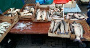 В Феодосии на рынке нашли… рыбу без документов