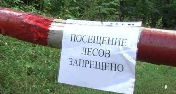 В течение 21 дня посещать леса Крыма запрещено