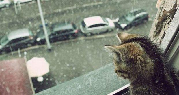 В Крыму - прохладно и дожди. Прогноз погоды на 14 мая